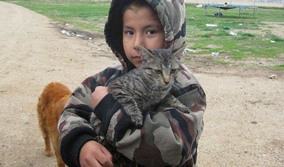 Photo - A boy holds his cat at a spay/neuter clinic.