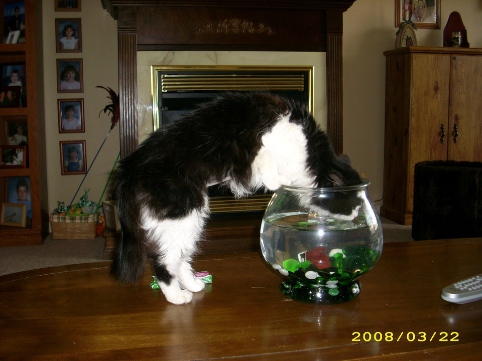 This is Mattie getting a drink.<br/><b>Community Photo By:</b> Kelli Smith<br/><b>Submitted By:</b> kelli, midwest city