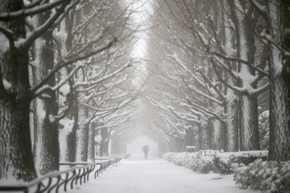 Photo - A man walks on snow-covered tree-lined road in Yokohama, Japan, Saturday, Feb. 8, 2014. The Japan Meteorological Agency issued the first heavy snowfall warning for central Tokyo in 13 years.  Some 20-centimeter (7.9-inch) of snowfall is expected by Sunday morning in the metropolitan areas. (AP Photo/Eugene Hoshiko)