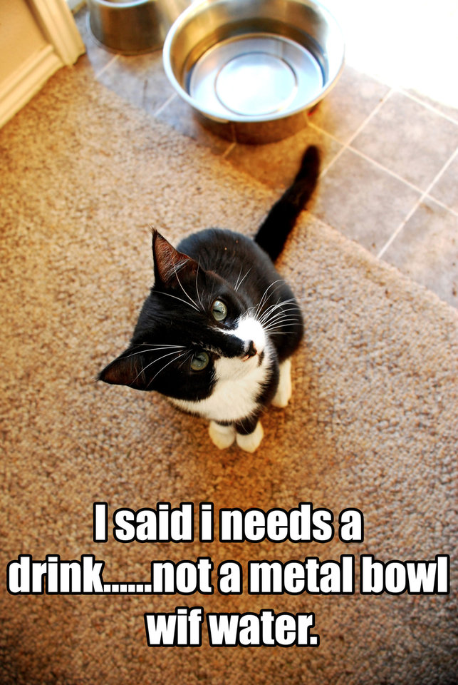 "This publicity photo provided by I Can Has Cheezburger shows an image of a cat by Kristine Oakhurst using LOLcat speak, ""I said i needs a drink....not a metal bowl wif water."" Ben Huh, was key in launching the cat meme when he and a group of investors bought the I Can Has Cheezburger site in September 2007. The site, now an empire of sites for Huh, allows users to generate captions on cat photos using LOLcat speak, a language with spelling and syntax all its own. (AP Photo/I Can Has Cheezburger, Kristine Oakhurst)"