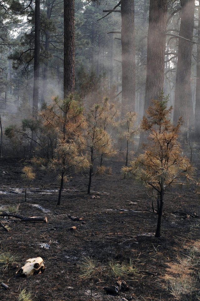 Photo -   This photo provided by the U.S. Forest Service shows a burned through section at the Gila National Forest blaze, on Friday June 1, 2012. Fire officials said Friday, that the massive Gila Wilderness blaze is now nearly 217,000 acres. That's more than 25,000 acres larger than than the day before. (AP Photo/U.S. Forest Service, Brandon Oberhardt)