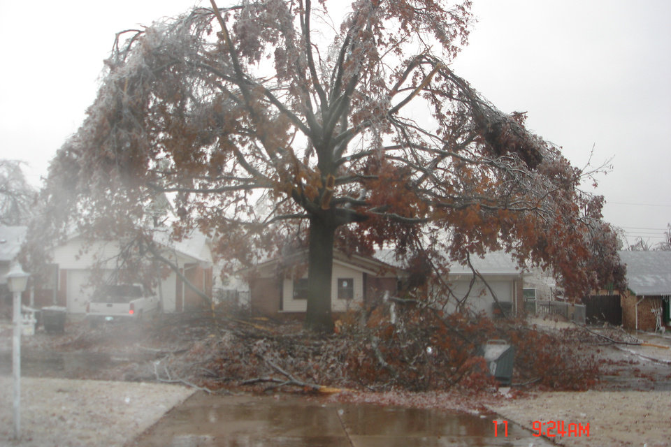 Hugh Pecan Tree in Midwest City that has taken it poorly<br/><b>Community Photo By:</b> Josh Allison<br/><b>Submitted By:</b> Rick , Midwest City