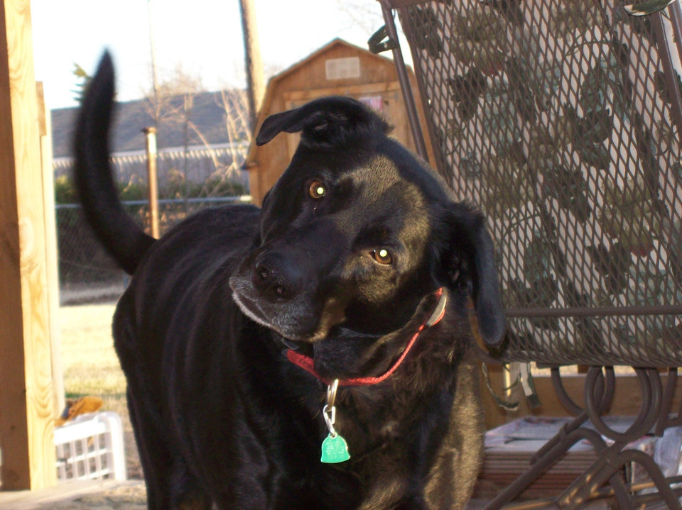This is my dog name Summer. She Blk lab mix and every time you talk to her, she always cock her head either side and I thought she was so darling. The way she cocks her head, she was so cute to make me smile. Community Photo By: Cathy Miller Submitted By: Cathy, Bethany