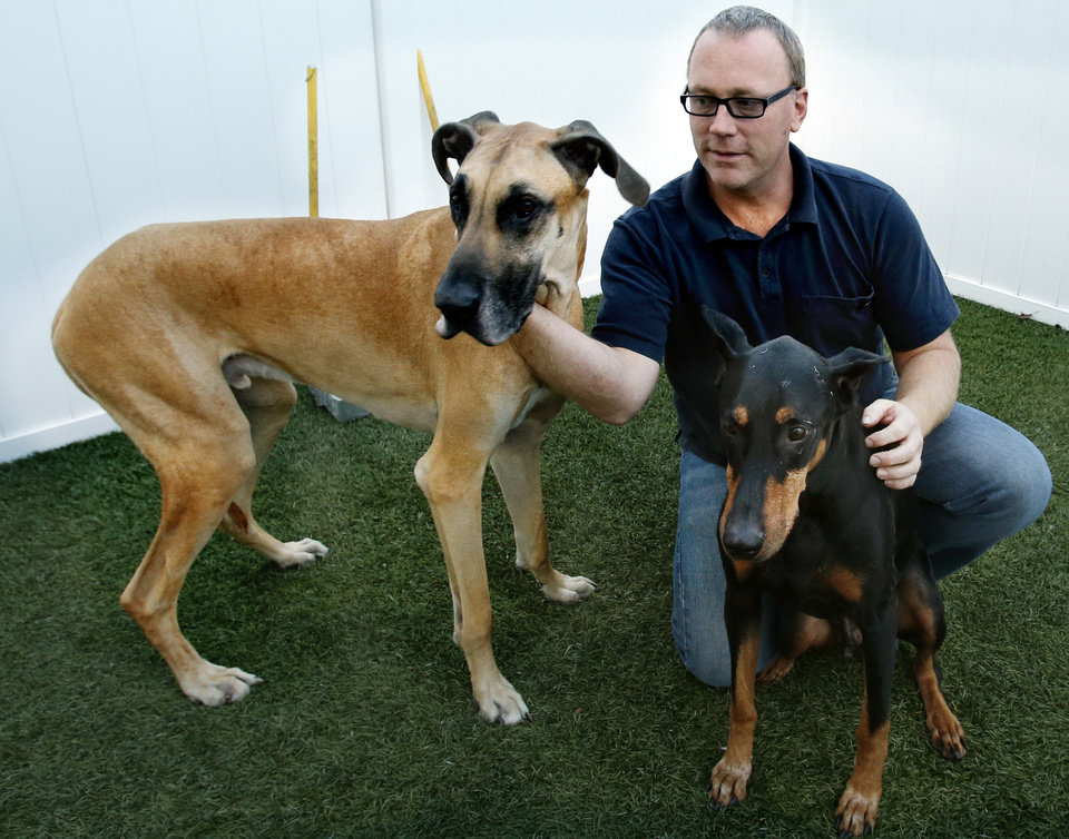Michael Delaney pets boarders Goliath, left, and Jake at his wife�s business, Fur Night and Day in Norman.  Photo BY STEVE SISNEY, THE OKLAHOMAN