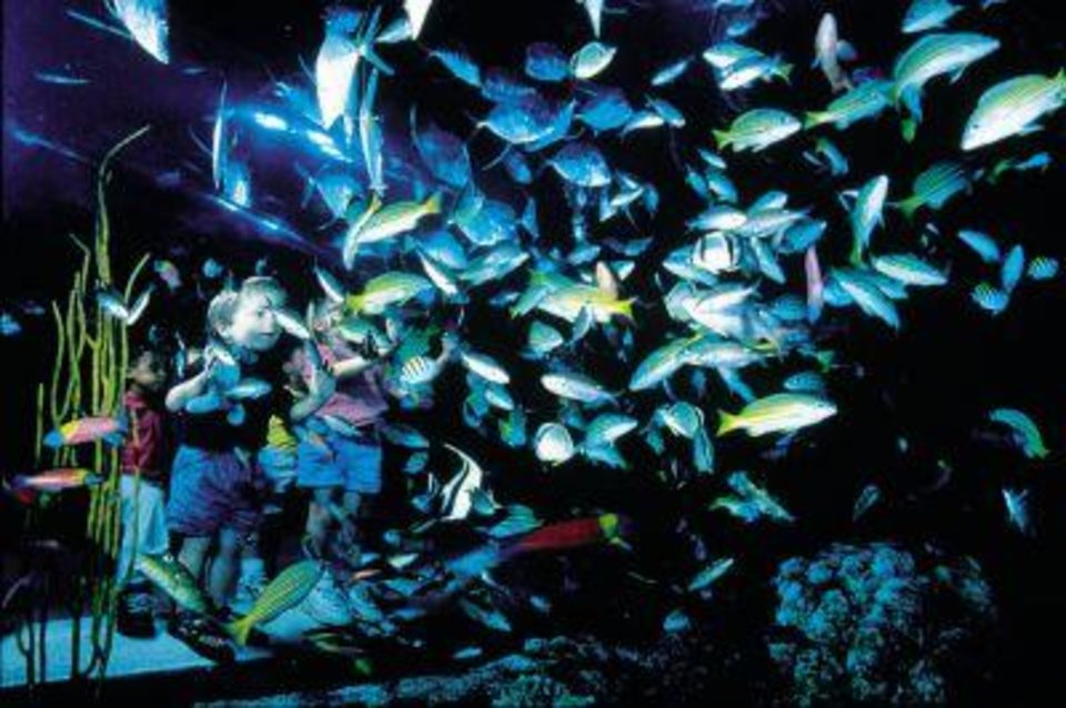 Photo - COLORADO: Visitors to Denver can find a lot for kids to see at the Downtown Aquarium. Among the activities is snorkling in the aquarium's largest fish tanks.   ORG XMIT: 0811061718261760