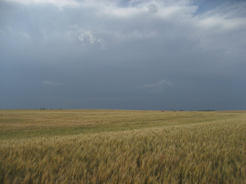 A wheat field in Canadian County on Thursday. This year will be one of the poorest wheat harvests in decades in Oklahoma. Photos provided  <strong> -  Mike Schulte  </strong>