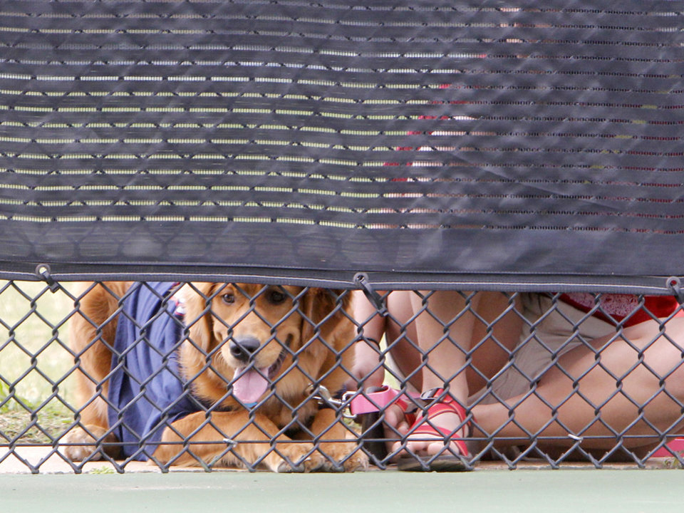 Photo - A dog watches the 6A Boy's State Tennis Tournament at the OKC Tennis Club in Oklahoma City, OK, Friday, May 10, 2013,  By Paul Hellstern, The Oklahoman