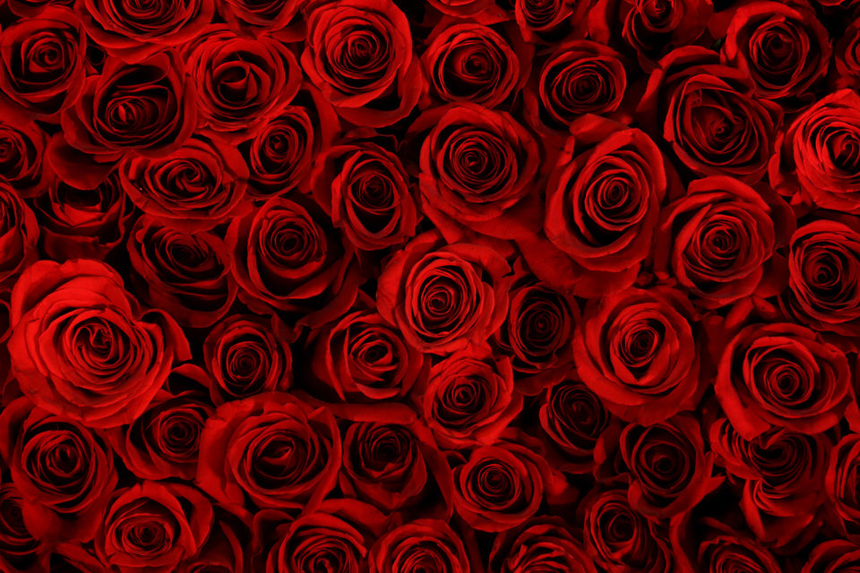 This Feb. 28, 2013 photo shows a many roses in a Schaffer Designs installation titled