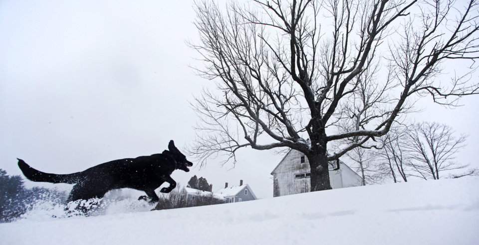 Photo - Luna, a black Lab mix, frolics in fresh snow in East Derry, New Hampshire, Thursday, Dec. 27, 2012. The southern N.H. area received about eight inches of snow from the winter storm. (AP Photo/Charles Krupa)