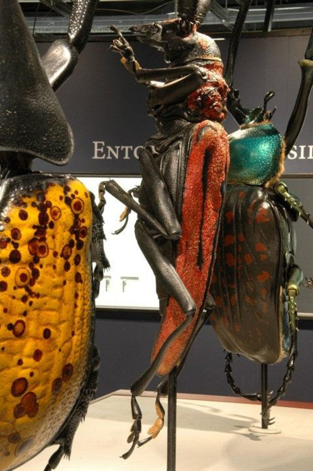 "Giant statues of bugs are on display in the ""Bugs...Outside the Box"" exhibit at the Sam Noble Oklahoma Museum of Natural History. PHOTO PROVIDED <strong></strong>"