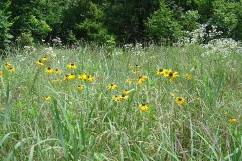 Wildflowers in Bloom<br/><b>Community Photo By:</b> Mary Stephens<br/><b>Submitted By:</b> Mary, Washington