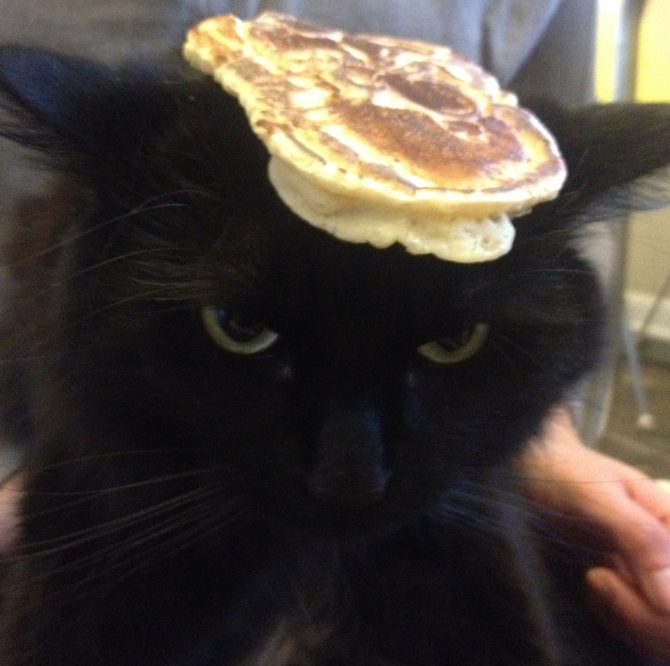Tom Johnson and Holly Halter of Minneapolis subjected their cat to a popular meme, which involves balancing a pancake on a subject�s head. Photo courtesy of Minneapolis Star-Tribune