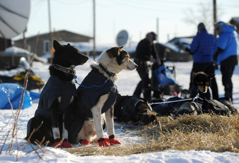 Photo - Robert Sorlie's dogs wait as the musher prepares to leave the Yukon River village of Kaltag during the 2014 Iditarod Trail Sled Dog Race on Saturday, March 8, 2014.  (AP Photo/The Anchorage Daily News, Bob Hallinen)
