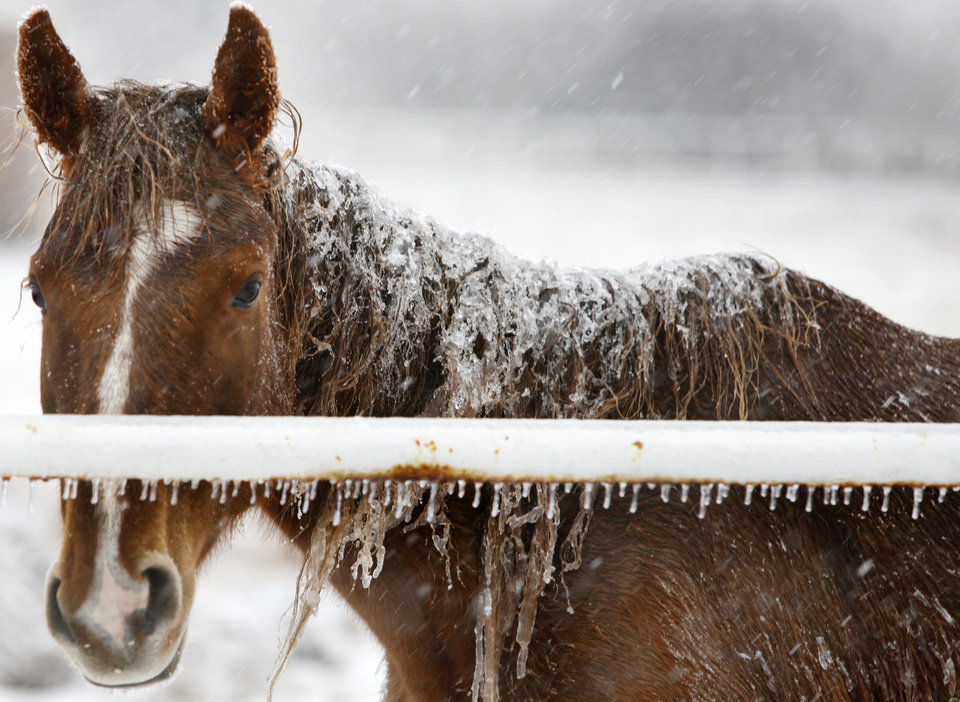 Photo - A horse stands covered with snow and ice near Midwest Blvd. and Danforth in Edmond, Oklahoma January 29, 2010. Photo by Steve Gooch, The Oklahoman