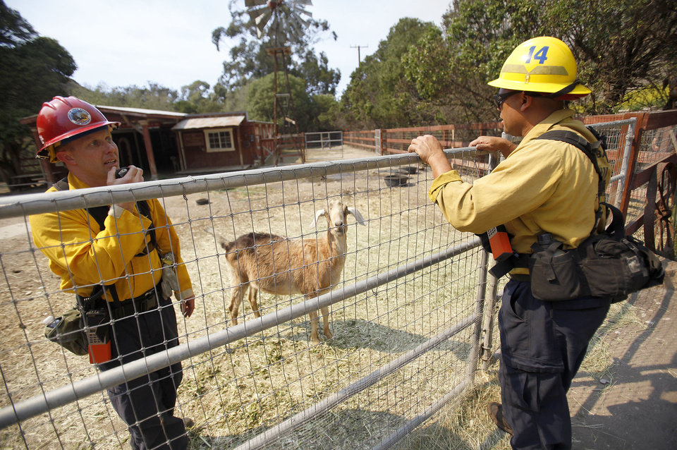 Photo - Santa Barbara County Fire Fighters call animal control to evacuate some animals left behind after some Lompoc residents were under mandatory evacuation due to the Miguelito Fire Tuesday May 13, 2014. Wildfires pushed by gusty winds chewed through canyons parched by California's drought, prompting evacuation orders for 1,200 homes and businesses in Santa Barbara County. (AP Photo/The Santa Maria Times, Daniel Dreifuss)