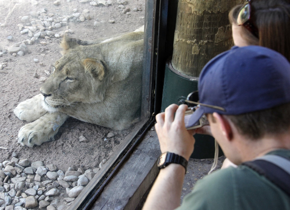 Rob Melsby with his wife, Heather Melsby, takes a picture through the glass of a lion resting in the shade at the Oklahoma City Zoo in Oklahoma City, Friday, May 29, 2009. Photo by Nate Billings, The Oklahoman