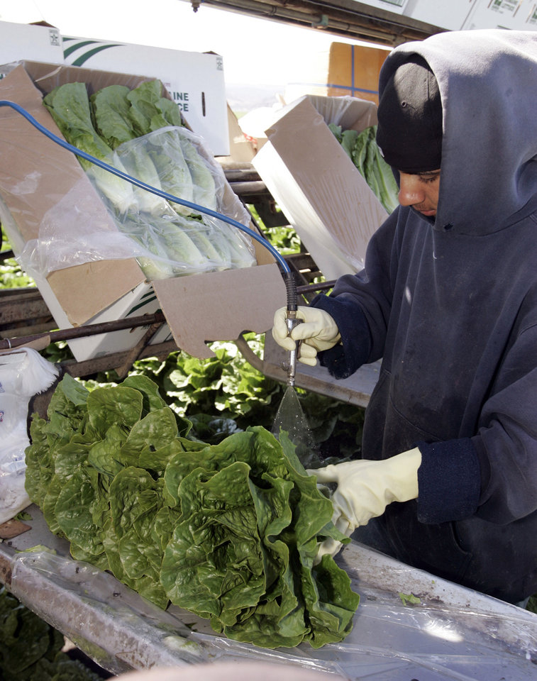 Photo - FILE - In this Thursday, Aug. 16, 2007 file photo, a lettuce worker washes romaine lettuce in Salinas, Calif. Leafy green vegetables were the leading source of food poisoning over an 11-year period, federal health officials say, Tuesday, Jan. 29, 2013. However, the most food-related deaths were from contaminated chicken and other poultry. (AP Photo/Paul Sakuma, File)