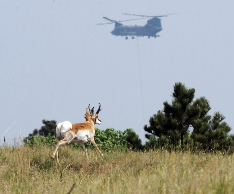 Photo - A pronghorn runs across a field while a helicopter from Fort Carson helps fight the Black Forest Fire Wednesday, June 12, 2013, in Colorado Springs, Colo. Near Colorado Springs, authorities fear that a 12-square-mile wildfire in a heavily-wooded residential area might have already destroyed around 100 homes _ even as it continued to send up puffs of black smoke and likely consumed more buildings.  (AP Photo/The Gazette, Christian Murdock) MAGS OUT