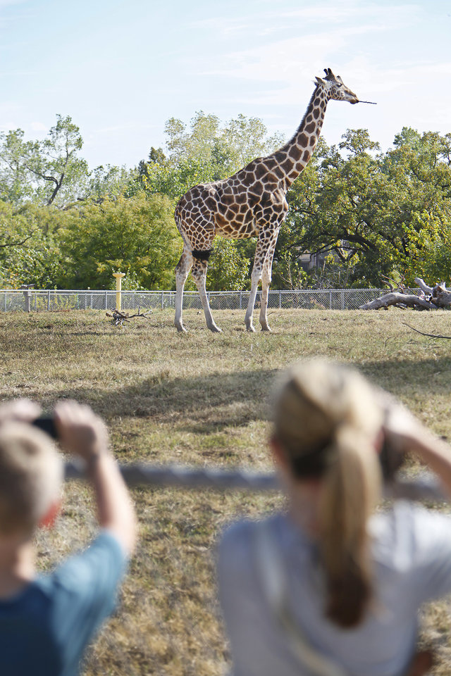 Giraffe at the Oklahoma City Zoo, Thursday, October 21,12010.   Staff photo by David McDaniel/The Oklahoman