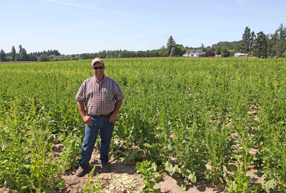 Photo - In this photo taken June 6, 2014, grower Robert Purdy stands in his field of genetically engineered sugar beets near Salem, Ore. Purdy, who grows the beets for seed for the Willamette Valley Specialty Seed Association, says a public GMO mapping system isn't needed because growers already participate in a voluntary mapping system. (AP Photo/Gosia Wozniacka)