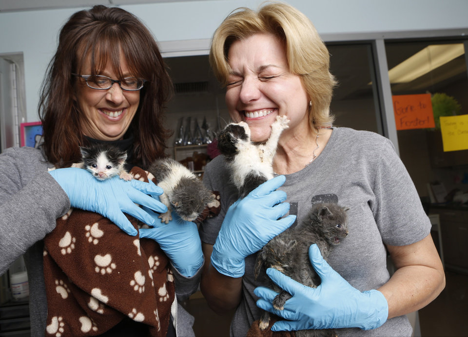 Photo - In this Thursday, April 3, 2014 photo, Best Friends Animal Society Los Angeles/NKLA manager Michelle Sathe, left, and volunteer Sarita Carden hold a litter at the Best Friends Animal Society kitten nursery in the Mission Hills area of Los Angeles. Tens of thousands of people who think they are saving abandoned wild kittens by taking them to shelters are hastening their deaths because most shelters don't have round-the-clock staffs to care for them. (AP Photo/Damian Dovarganes)