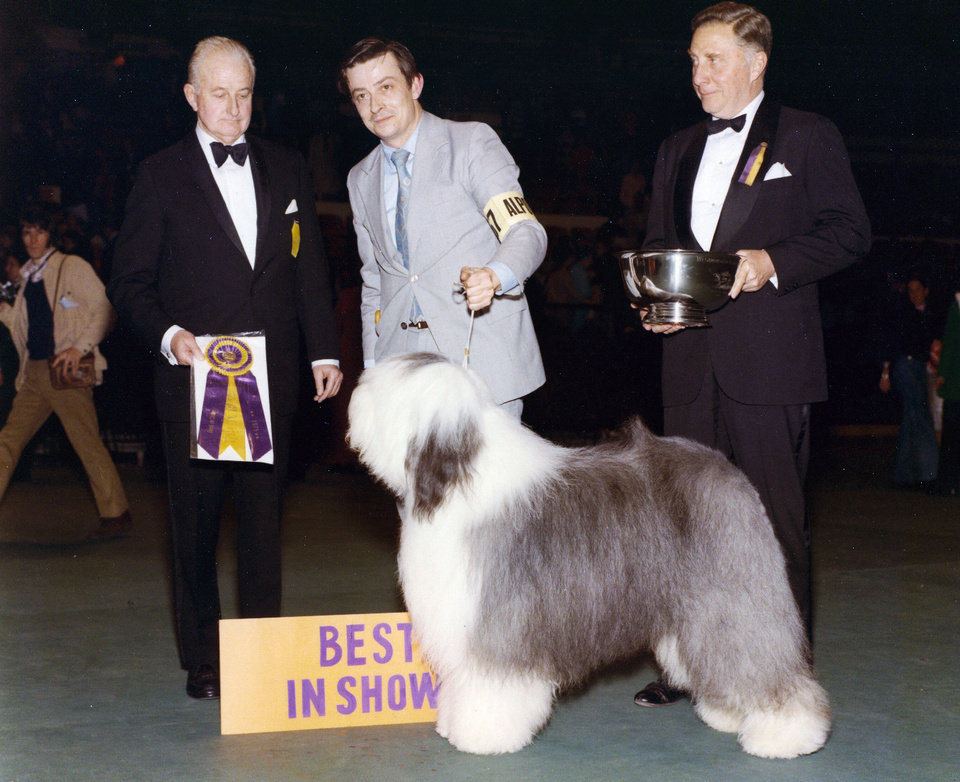 Photo - This 1975 photo provided by the Westminster Kennel Club shows the Westminster Best In Show winner, Sir Lancelot of Barvan. Sheepdogs have been recognized by the American Kennel Club since the late 1800's and won best in show at Westminster in 1914 and 1975. Breeders in the United States and England are concerned about the drop in the number of purebred sheepdog puppies registered in the two countries each year, as more owners choose smaller dogs like pocket pets and designer puppies. (AP Photo/Westminster Kennel Club)