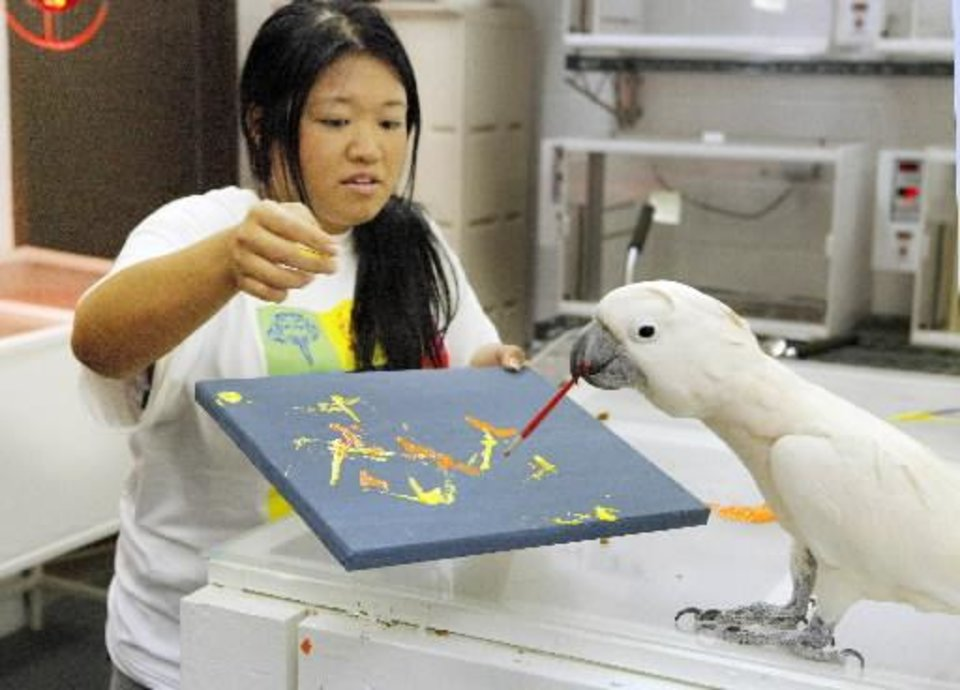 "Zeppy, a sulphur-crested cockatoo, takes a brush from bird keeper Holly Ray while painting for the Oklahoma City Zoo's "" Art Gone Wild"" exhibit on Tuesday, July 31, 2012. Photo by Paul B. Southerland, The Oklahoman Archives"