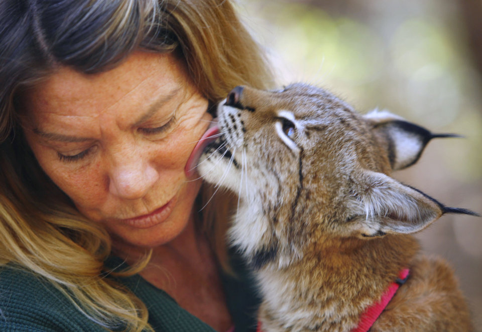 Janet Schmid gets a taste by a European  Lynx at the  Little  River  Zoo in Norman, Oklahoma on Tuesday October 17, 2006. The lynx pictured is similar to the kind of lynx that attacked a 3-year-old boy today in Norman. Photo by Steve Sisney/The Oklahoman