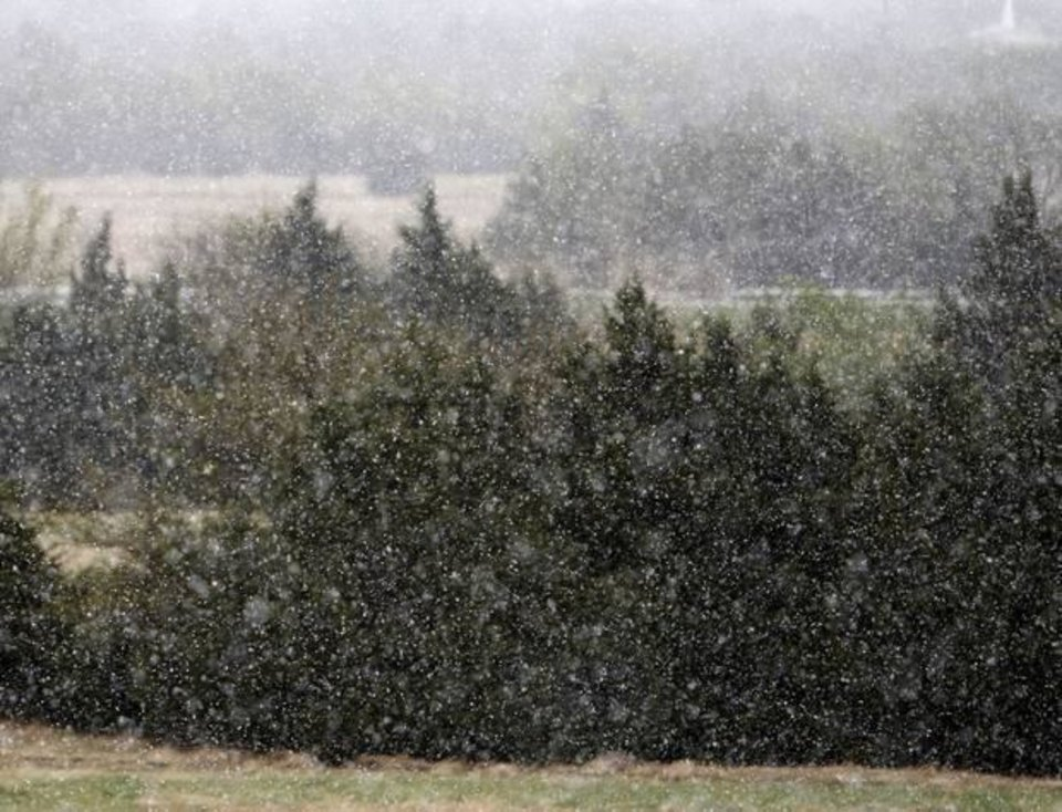 Photo - Snow falls on cedar trees in north Oklahoma City, OK, Monday, April 14, 2014, Photo by Paul Hellstern, The Oklahoman