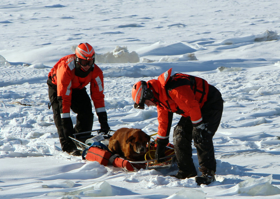 Photo - In this Monday, March 3, 2014 photo provided by the U.S. Coast Guard, crew members assigned to Coast Guard Cutter Bristol Bay assist a dog they found stranded on the ice of Lake St. Clair, Mich. The dog, who the crew later named