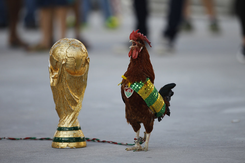 Photo - In this Wednesday, June 11, 2014 photo, a pet rooster named Paquita Fred stands next to a replica of the World Cup trophy in front of Maracana stadium, in Rio de Janeiro, Brazil. The 11-year-old rooster wearing a cape with the colors of the Brazilian national soccer team and a medallion of the local Fluminense soccer club gets his name from Fred, the Brazilian footballer who plays as a striker for Fluminense and is now one of the members of the national soccer team. (AP Photo/Leo Correa)