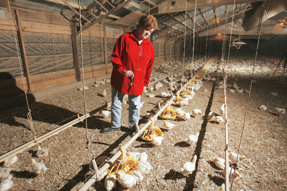 Photo - Bev Saunders checks a computer-controlled feeder in one of the chicken barns at 2-Saun Farms near Colcord. By David McDaniel
