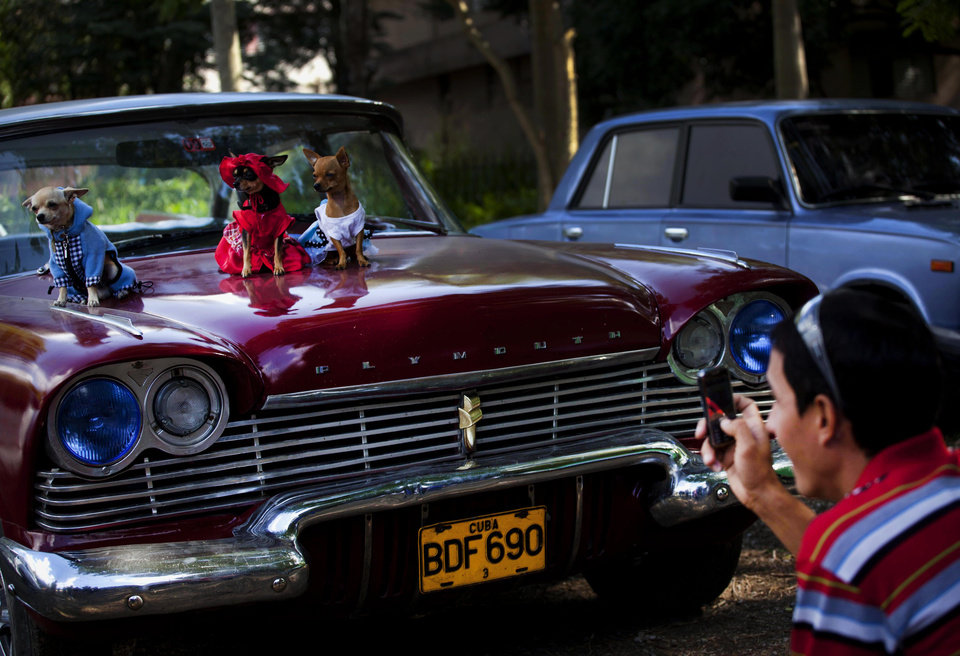 In this Nov. 25, 2012 photo, a person takes pictures of chihuahua dogs in costume, from left, Petite, Legrand and Lentille, sitting on the hood of a classic American car at the Fall Canine Expo in Havana, Cuba. Hundreds of people from all over Cuba and several other countries came for the four-day competition to show off their shih tzus, beagles, schnauzers and cocker spaniels that are the annual Fall Canine Expo's star attractions. (AP Photo/Ramon Espinosa)