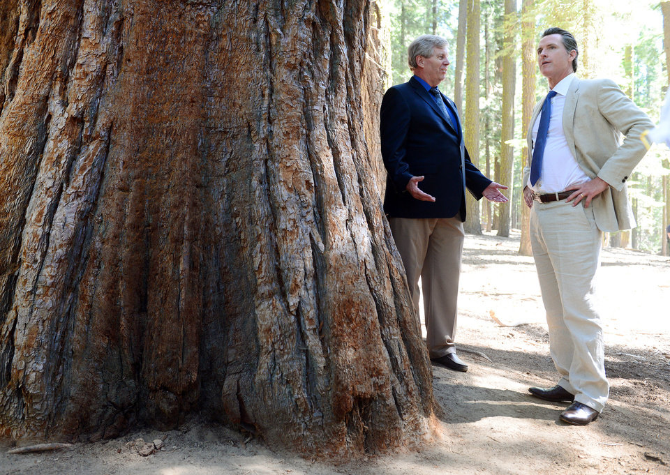 Photo - Lt. Gov. Gavin Newsom, right, chats with Mike Tollefson, president of the Yosemite Conservancy while standing next to a giant sequoia before the start of the Yosemite Grant sesquicentennial ceremony at Yosemite National Park's Mariposa Grove Monday, June 30, 2014. On June 30, 1864, President Abraham Lincoln signed the Yosemite Land Grant which eventually led to the national parks system. (AP Photo/The Fresno Bee, Craig Kohlruss)