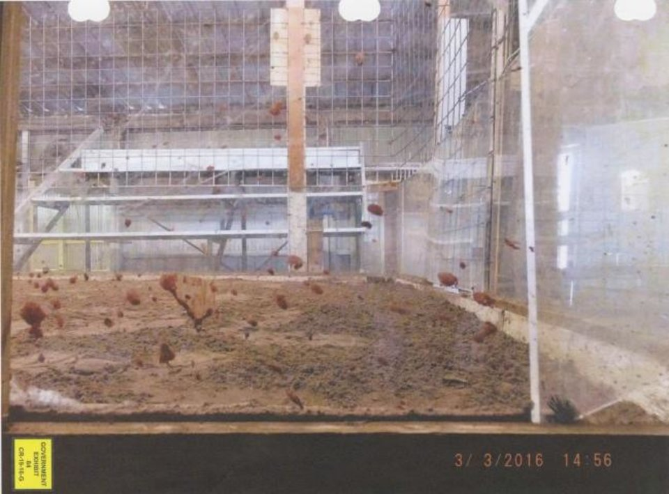 Photo -  Federal agents in 2016 found blood spatter on plexiglass surrounding a dirt pit where gamecocks fought to the death near Anadarko. [Photo provided]