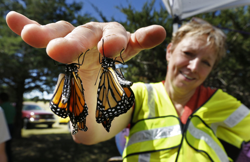 Photo - Two newly emerged monarch butterflies cling to Marilyn Stewart's fingers Saturday at the Monarch Migration and Butterfly Festival in Cole. PHOTO BY STEVE SISNEY, THE OKLAHOMAN  STEVE SISNEY