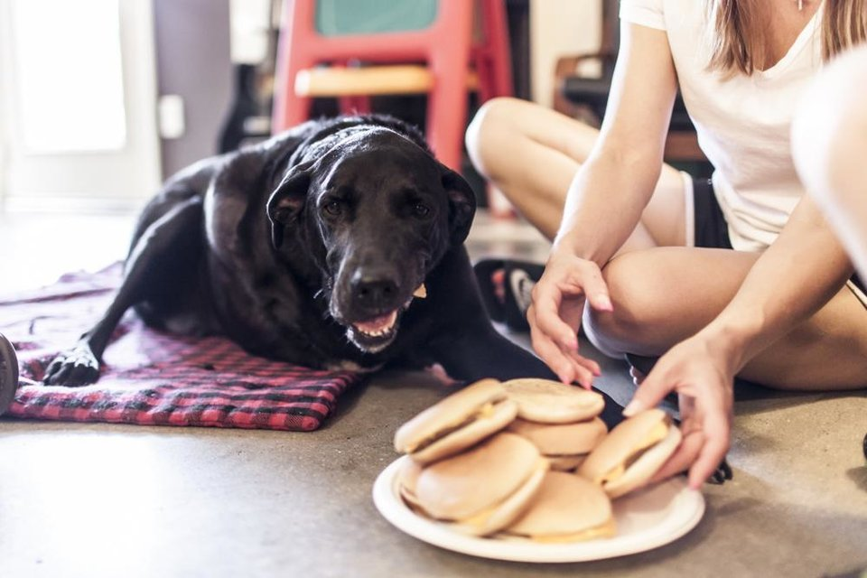 Photo -       Duke eats hamburgers before his death. His owner, Jordan Roberts, wanted his last day to be filled with joy.