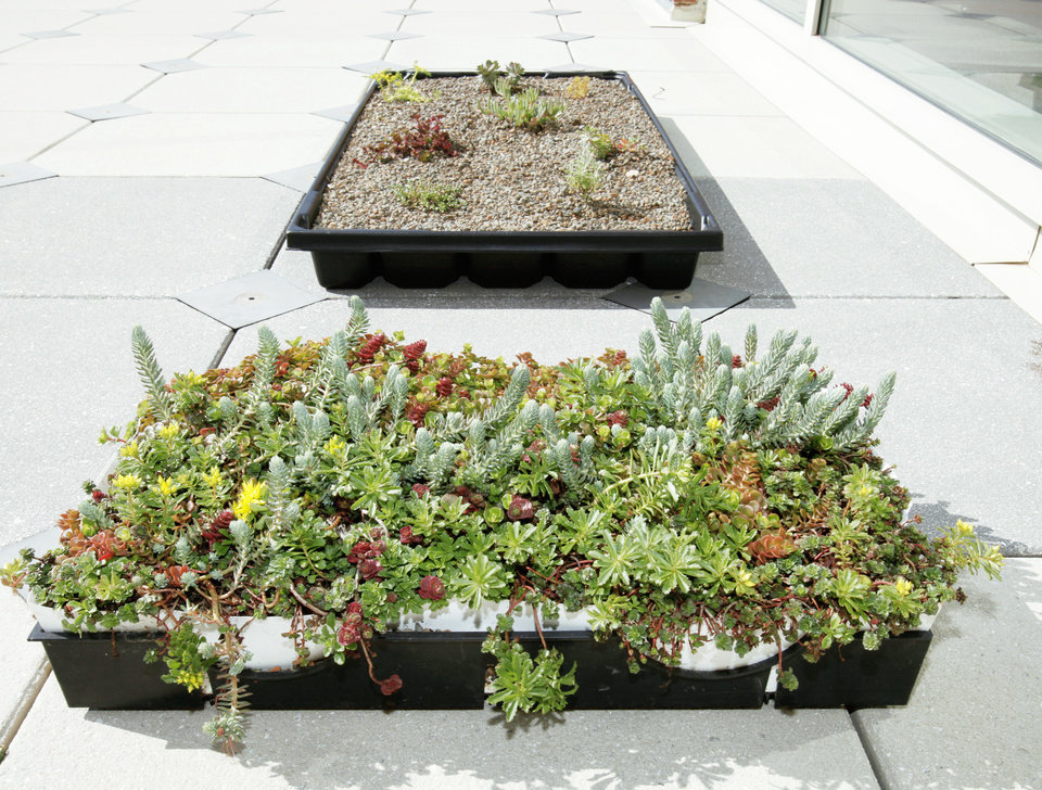 Photo - A display shows the rooftop planters as they are now, top, and how they will look when the plants have had time to grow. Photos by Steve Sisney, The Oklahoman