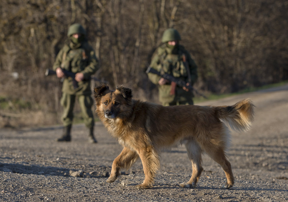 Photo - A dog walks past Russian soldiers standing outside a Ukrainian infantry base in Perevalne, Ukraine, Thursday, March 13, 2014. Crimea plans to hold a referendum on Sunday that will ask residents if they want the territory to become part of Russia. Ukraine's government and Western nations have denounced the vote as illegitimate and warned Russia against trying to annex the strategic peninsula. (AP Photo/Vadim Ghirda)