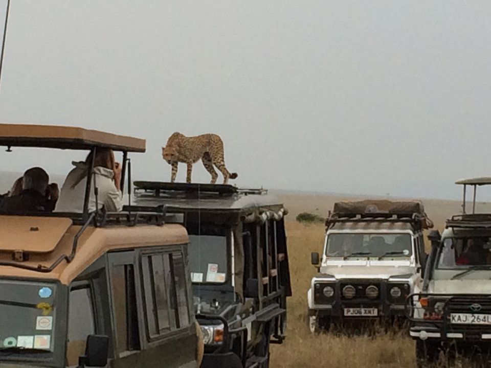 Photo -  After visiting Johannesburg, South Africa, and Abidjan, the Ivory Coast, Wes and Lori Lane went on a photo safari. Here, a cheetah stands on top of a vehicle with an open top. Photo by Wes Lane.