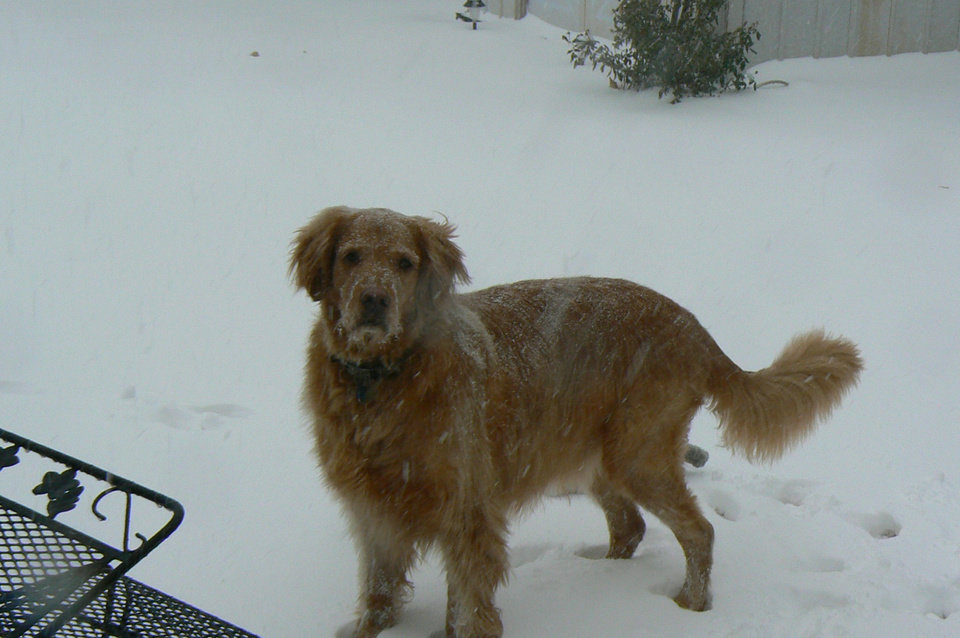 Connley playing in the snow; Edmond, OK.  Submitted by Sydney Morris.