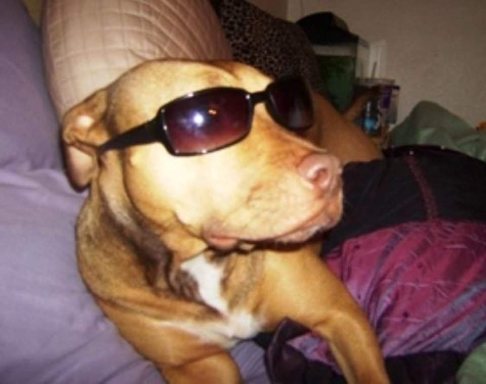 Kahlua, a loving 2 yr. old Pit Bull, showing off her sunglasses. She shouldn't be discriminated just because of her breed.<br/><b>Community Photo By:</b> Tiffany Calderon<br/><b>Submitted By:</b> Tiffany, Warr Acres