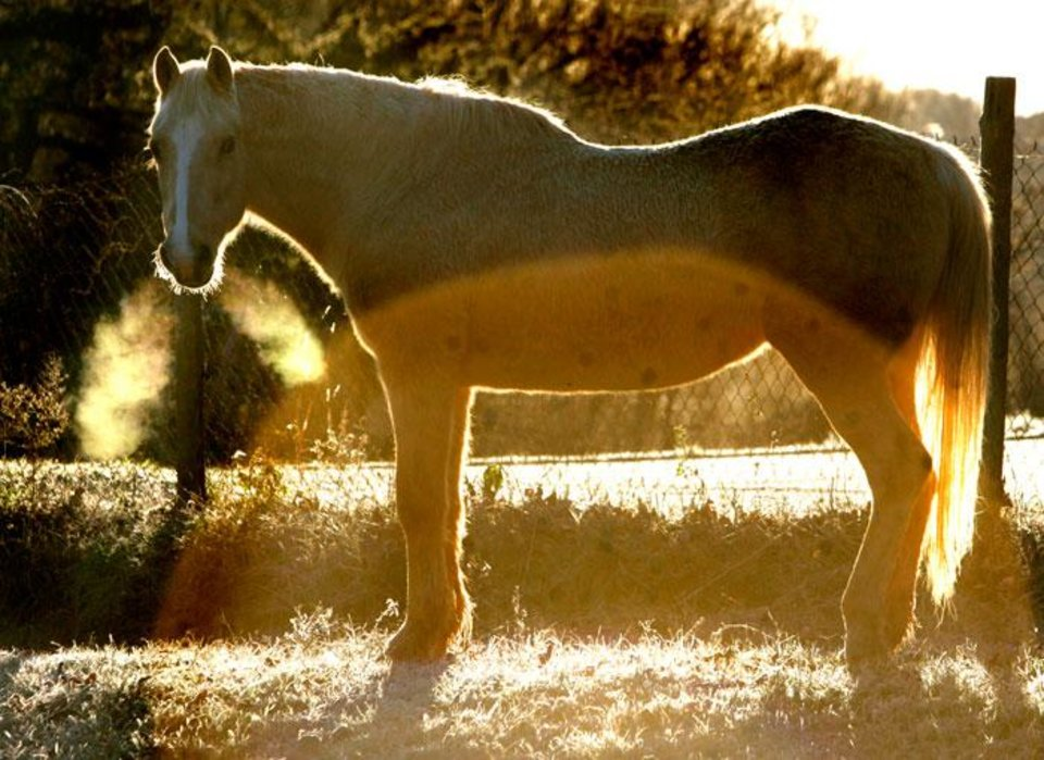 Photo -  Jennie Gayle, a 27-year-old mare, stands in a field near Pine and Highway 33 in Guthrie, Okla., December 4, 2009. Temperatures dropped into the teens in the area overnight. Photo by Steve Gooch, The Oklahoman
