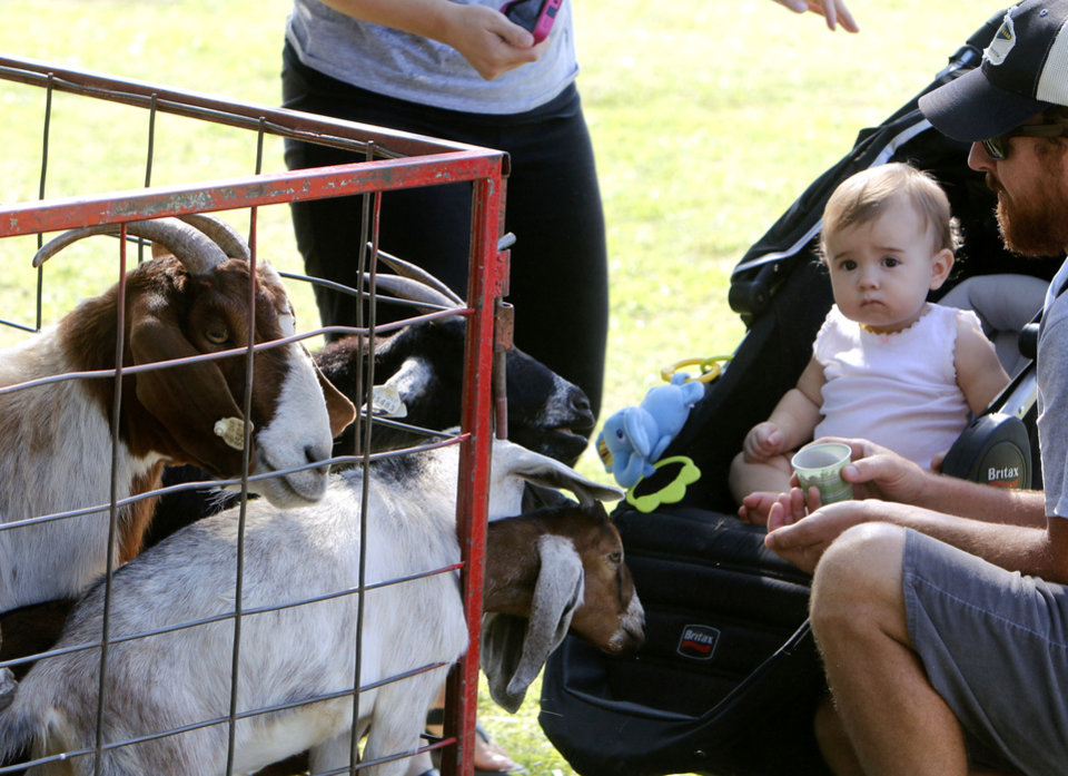 Photo - A toddler isn't sure how to react to hungry goats at a petting zoo during Bethany's Fourth of July events at Eldon Lyon Park in Bethany, OK, Friday, July 4, 2014,  Photo by Paul Hellstern, The Oklahoman