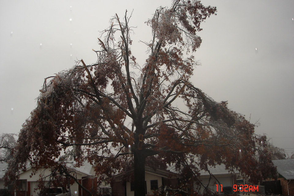 An old pecan tree in MWC doing it's impression of a weeping willow<br/><b>Community Photo By:</b> Josh Allison<br/><b>Submitted By:</b> Rick , Midwest City