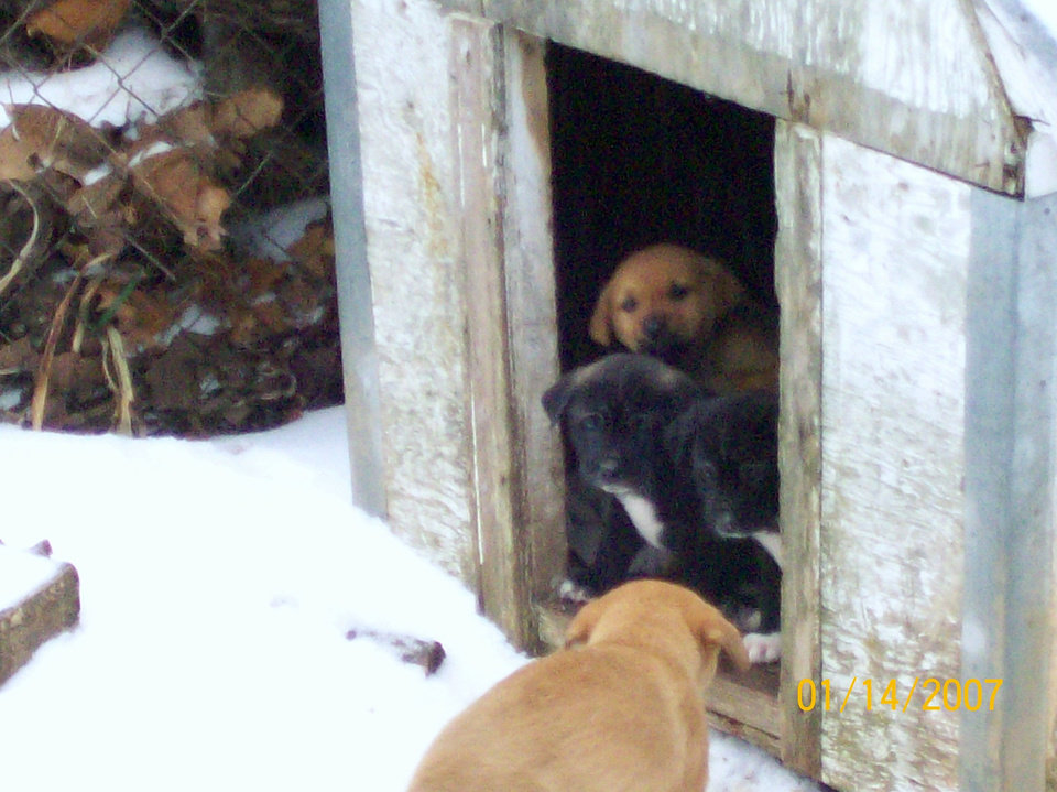 Puppies in the ice<br/><b>Community Photo By:</b> Angie Thomsen<br/><b>Submitted By:</b> Stephanie, chandler