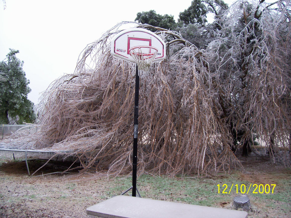 The tree has taken over our backyard!<br/><b>Community Photo By:</b> Lyndsey<br/><b>Submitted By:</b> Lyndsey, Choctaw