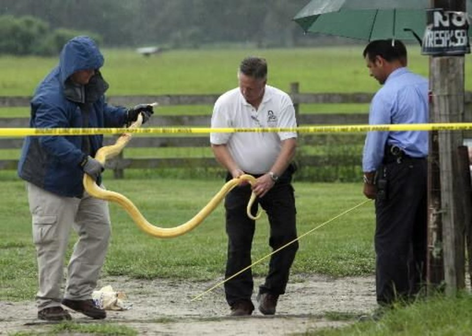 Police measure a Burmese  python after removing it from a home in Oxford, Fla. on Wednesday, July 1, 2009. Charles Jason Darnell, the snake's owner and the boyfriend of Shaunnia's mother, discovered the snake missing from its terrarium and went to the girl's room, where he found it on the girl and bite marks on her head, Caruthers said. Darnell, 32, stabbed the snake until he was able to pry the child away. (AP Photo/Ocala Star-Banner, Bruce Ackerman)