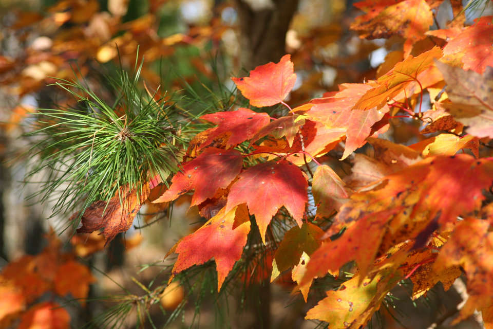 Fall Color on the Talimena Drive on Nov 11, 2007<br/><b>Community Photo By:</b> Phil H Morrow<br/><b>Submitted By:</b> Phil, Guthrie