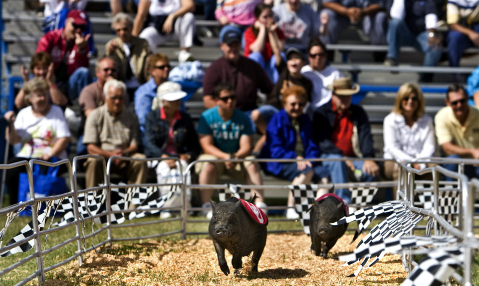 Pigs round the first turn during the pig races at the 2009 Oklahoma State Fair at State Fair Park on Wednesday, Sept. 23, 2009, in Oklahoma City, Okla. Photo by Chris Landsberger, The Oklahoman.